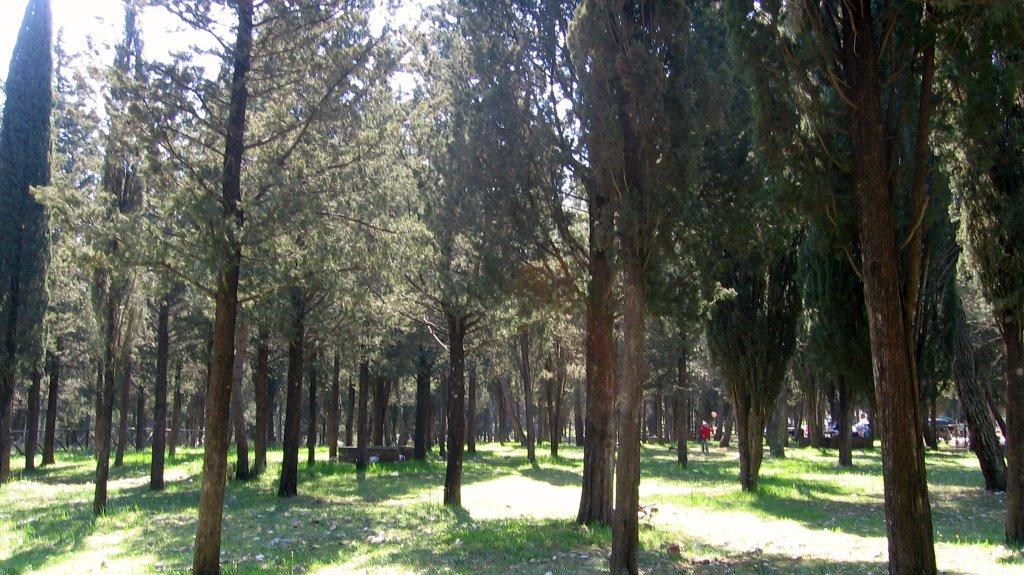 foresta-di-mercadante1