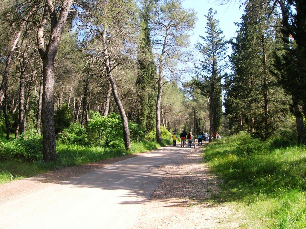 foresta-di-mercadante2