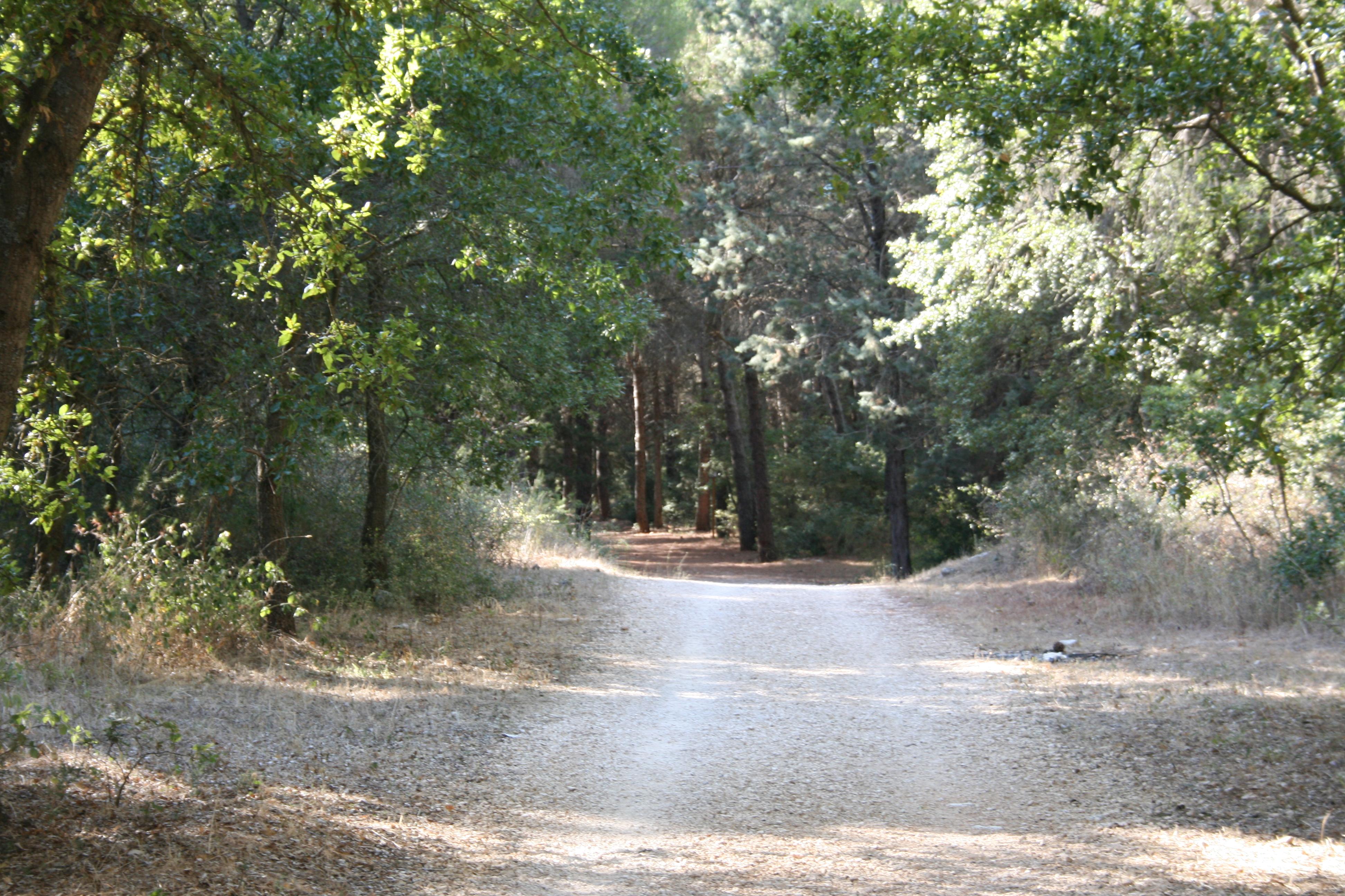 foresta-di-mercadante3