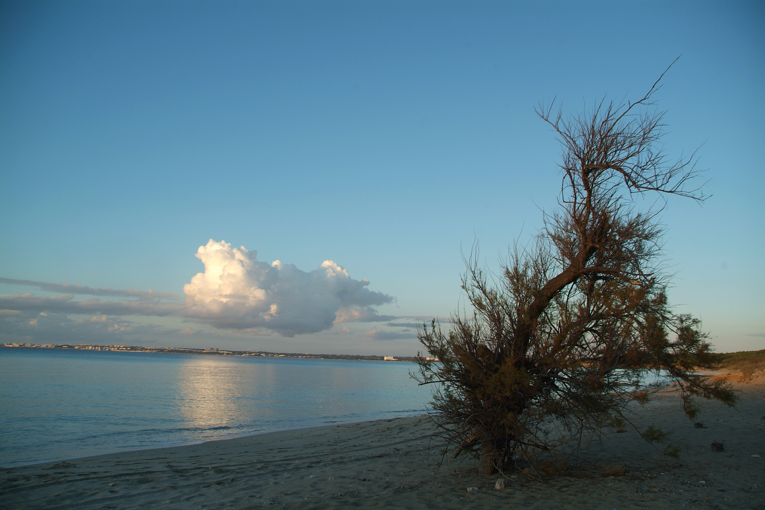 Cover Parco Naturale Isola di Sant'Andrea e Litorale di Punta Pizzo