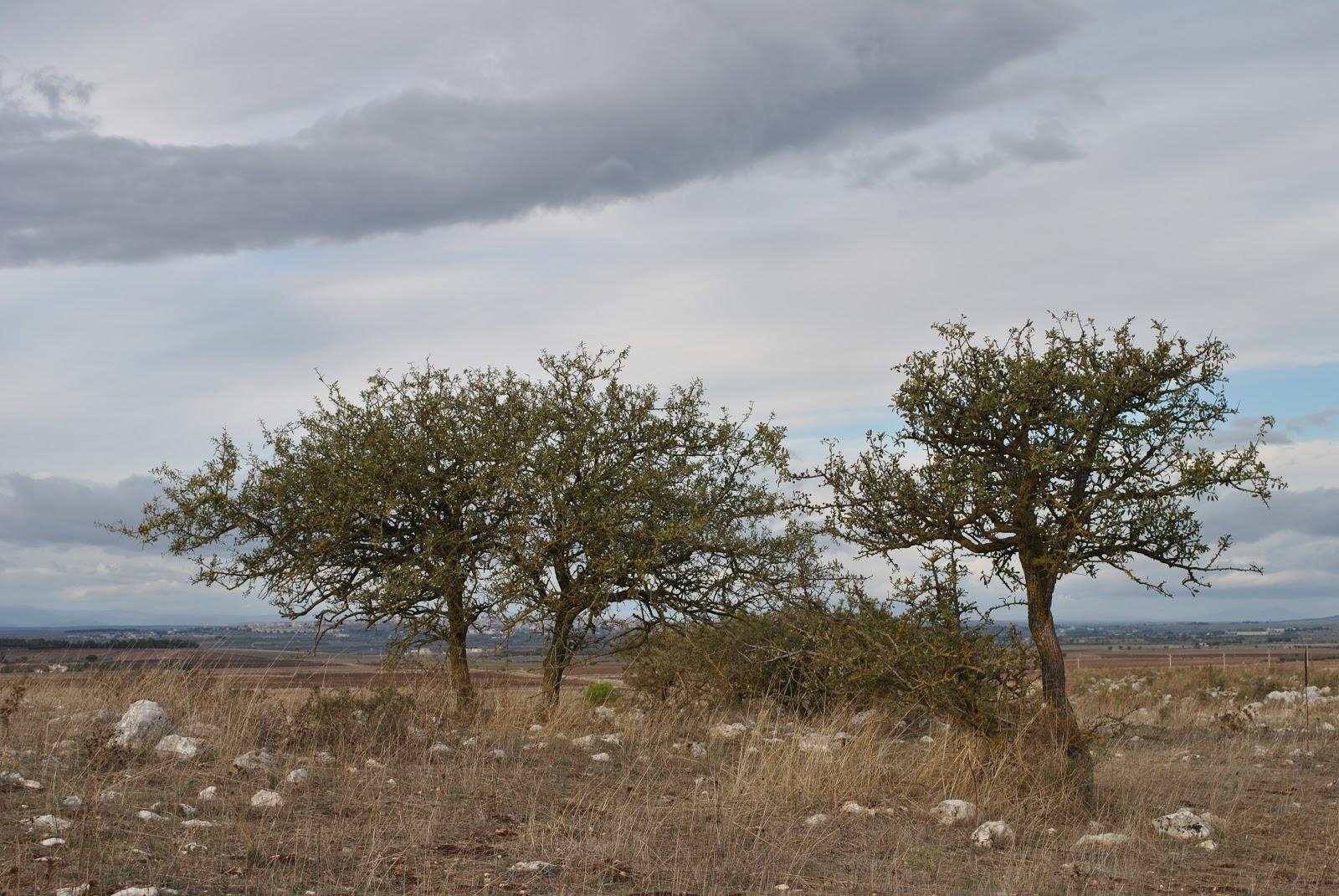 Cover Parco Nazionale dell'Alta Murgia