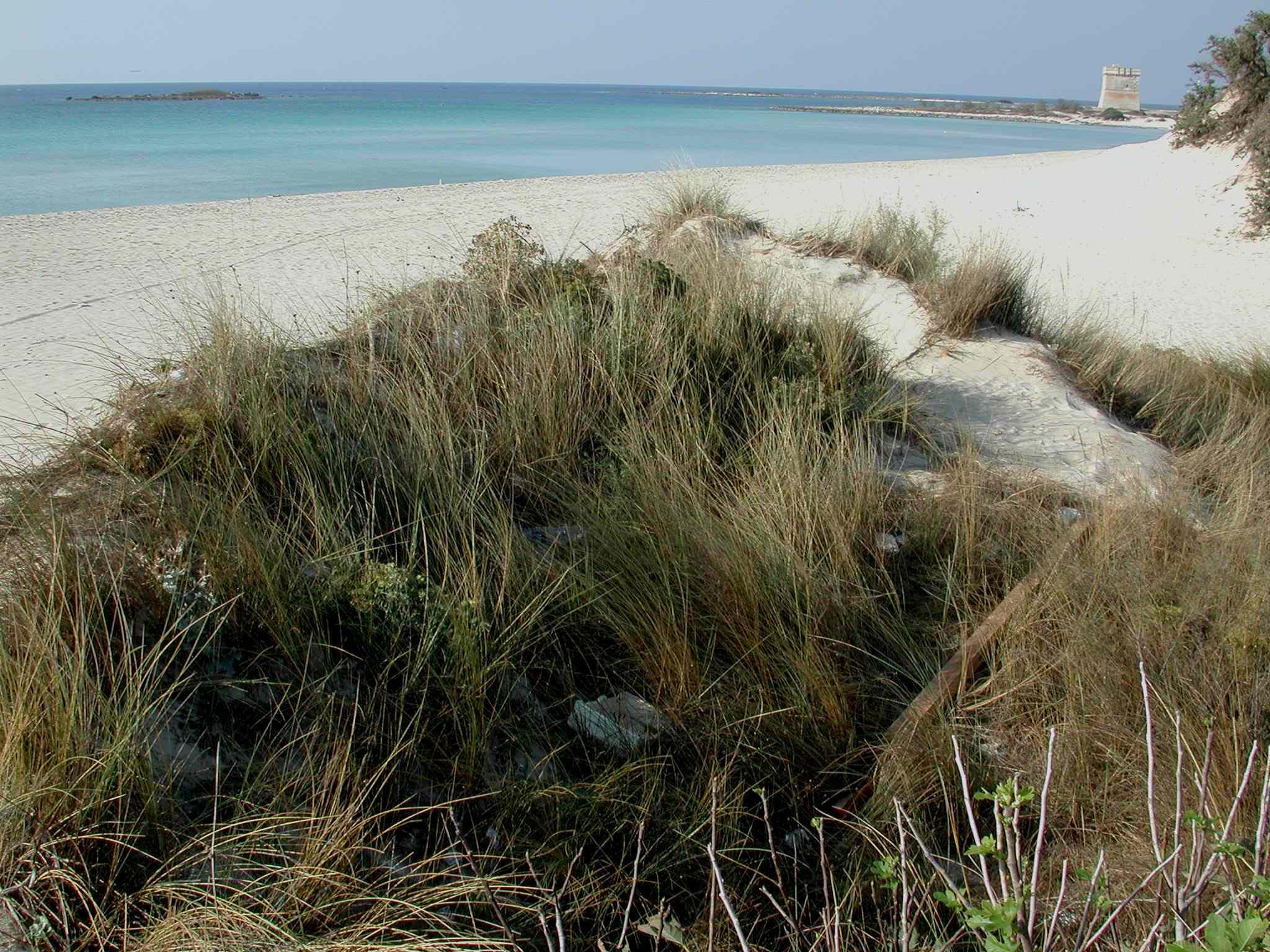 Riserva naturale palude del conte luoghi for Tartaruga di palude