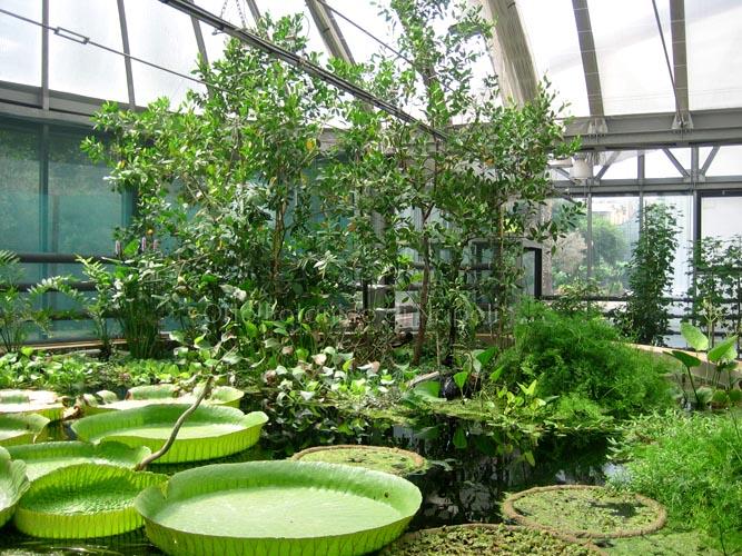 Cover Orto Botanico di Napoli