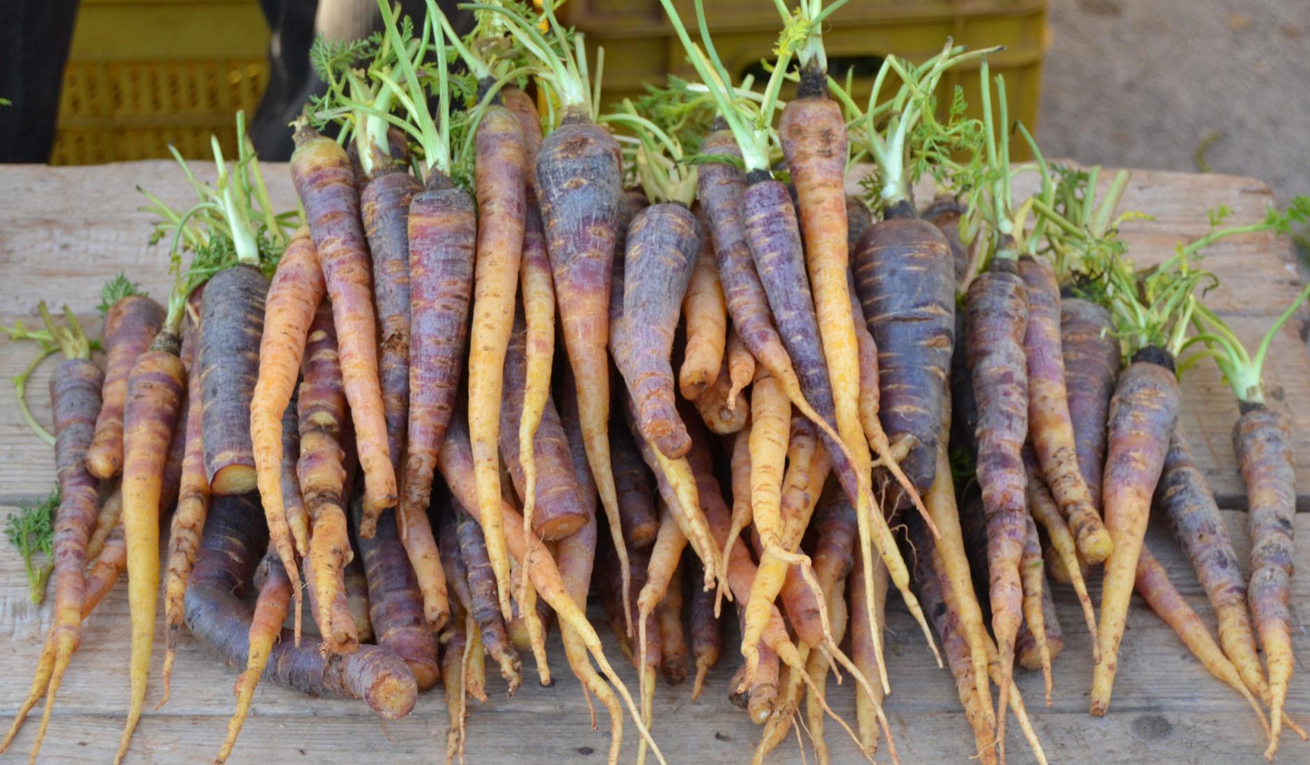 carota-tiggiano