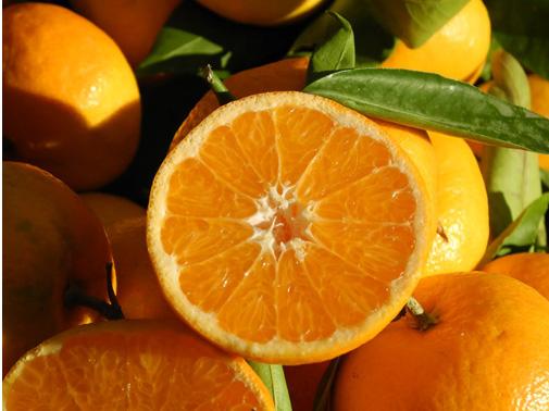 arancia-del-gargano-igp