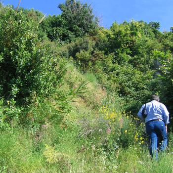 Cover Sentiero Forio-bosco di Zaro-Lacco Ameno