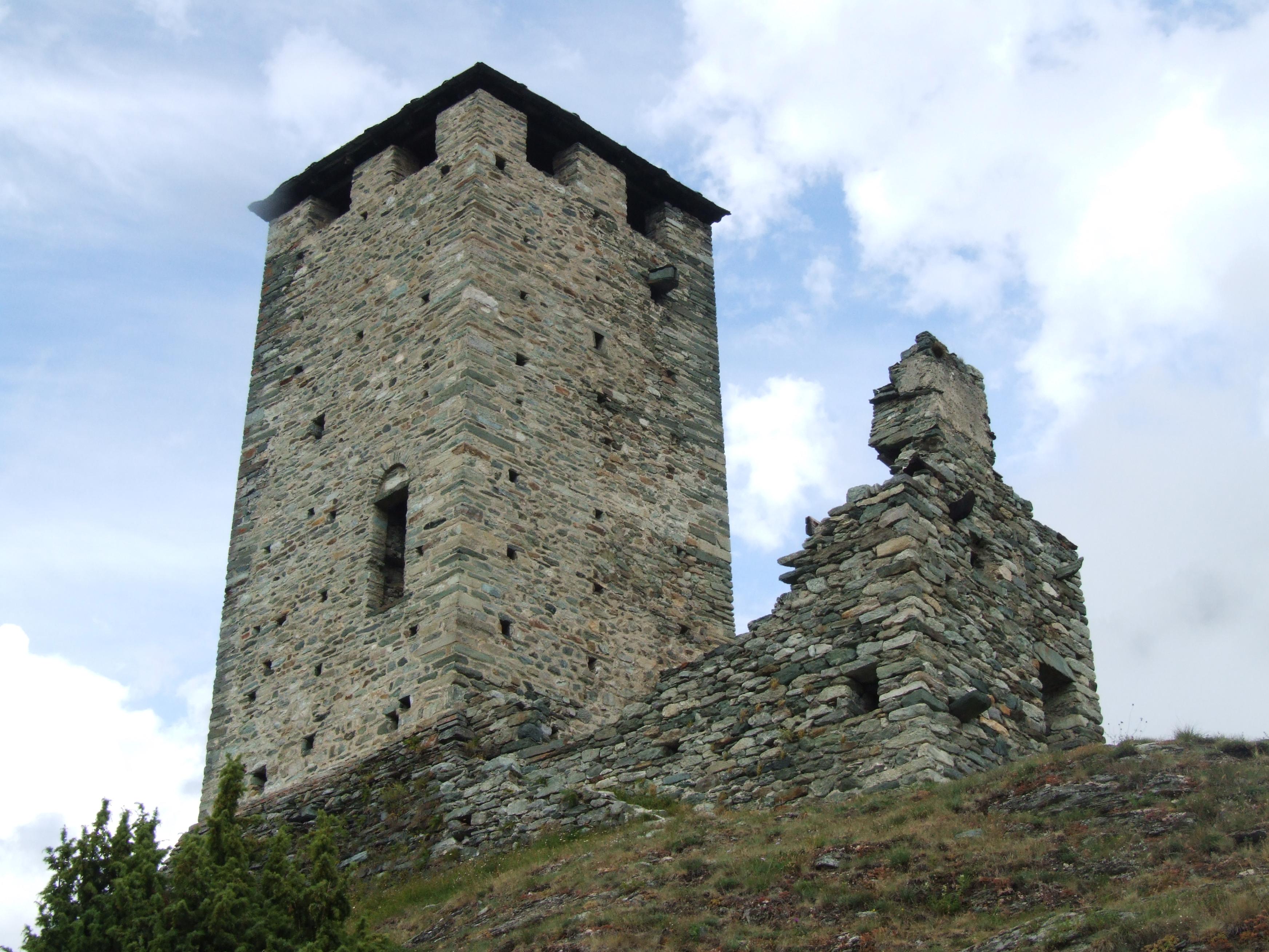 graines-torre2