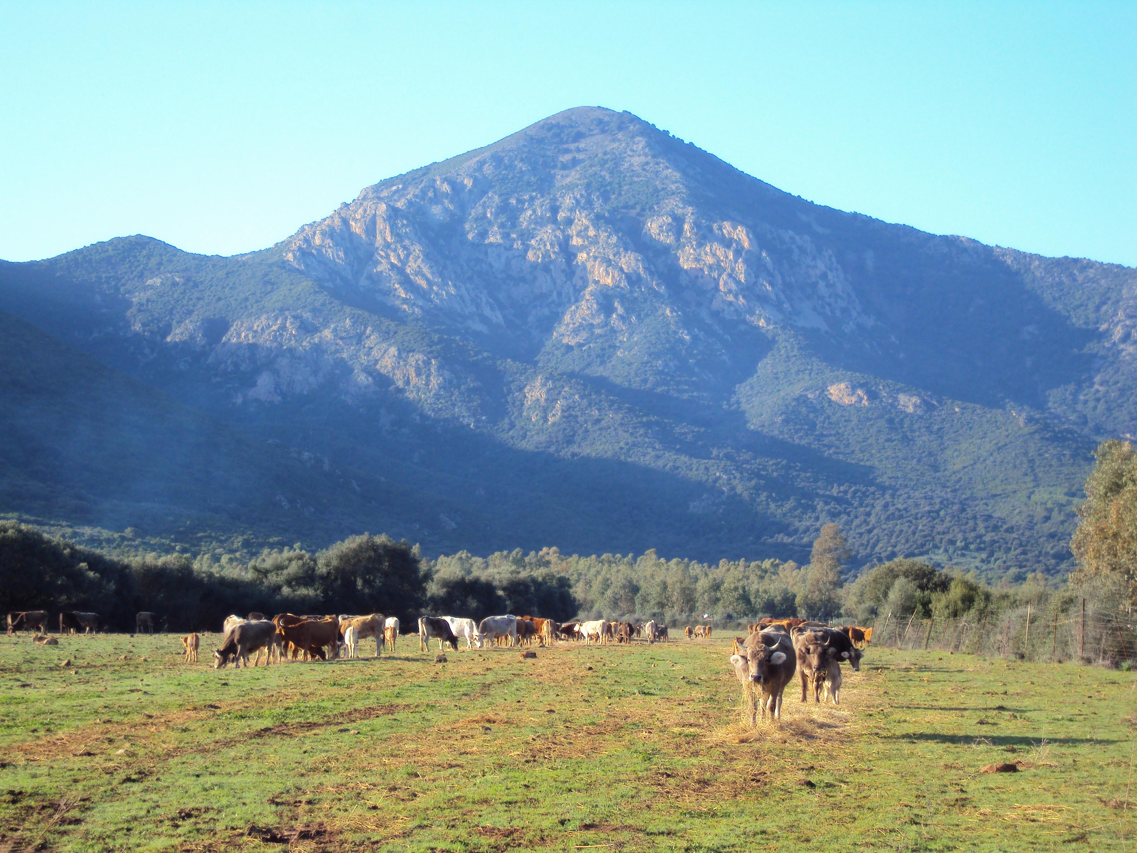 Cover Oasi WWF di Monte Arcosu