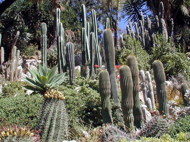 area-cactaceae-800