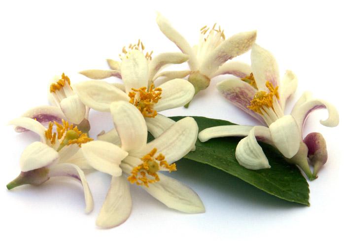 idrolato-fiori-arancio