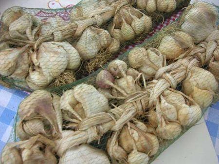 trecce-aglio-vessalico