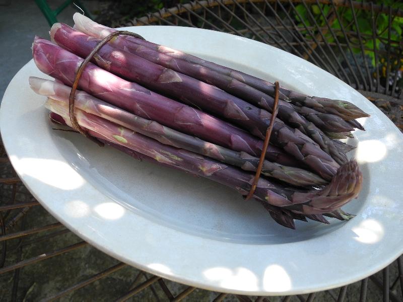 asparago-violetto_1399196169