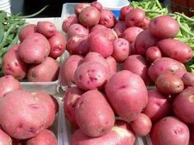 main-534520-patata-rossa