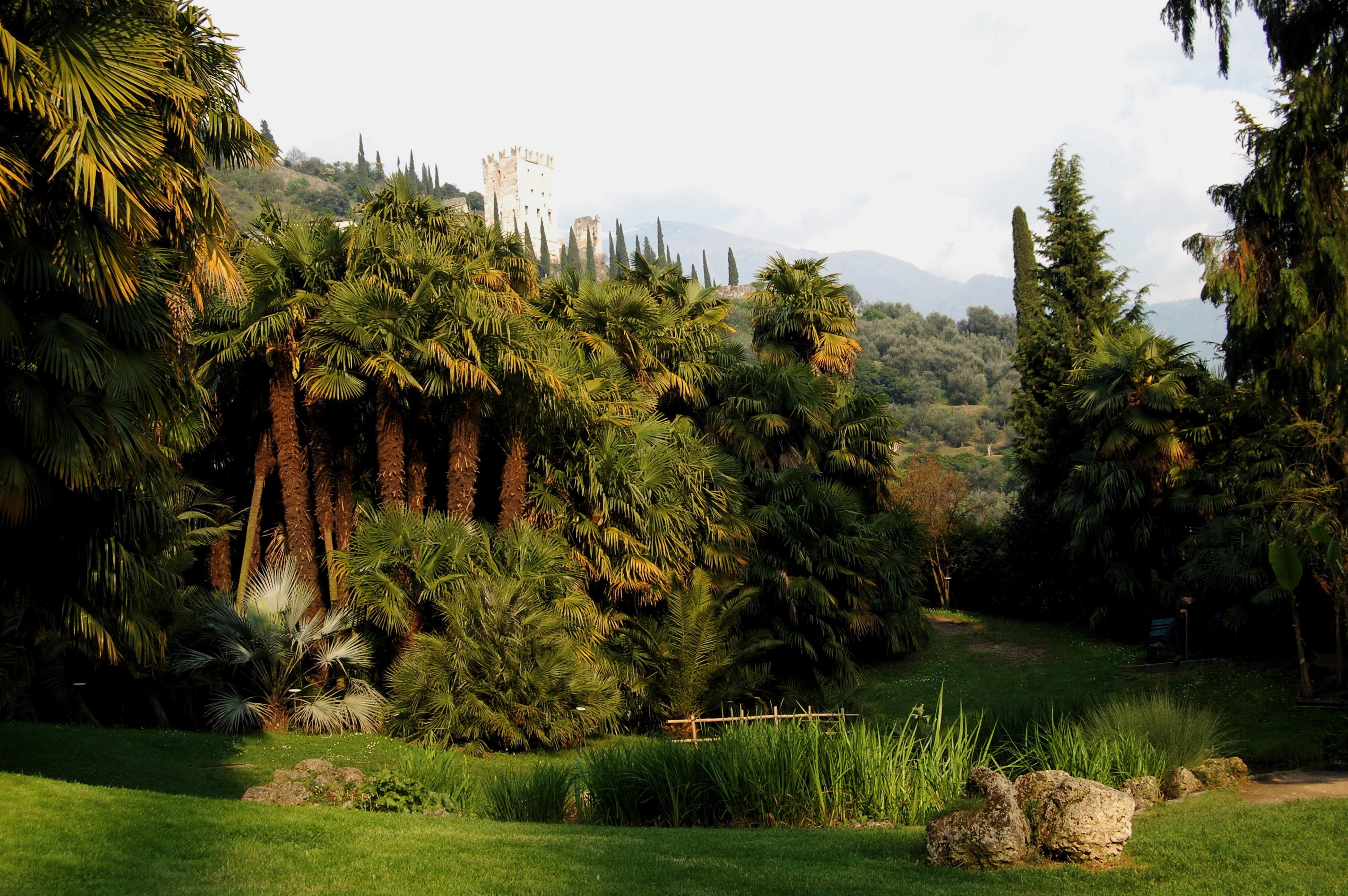 Cover Arboreto di Arco