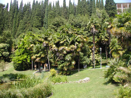 i-38062-arboretodiarco