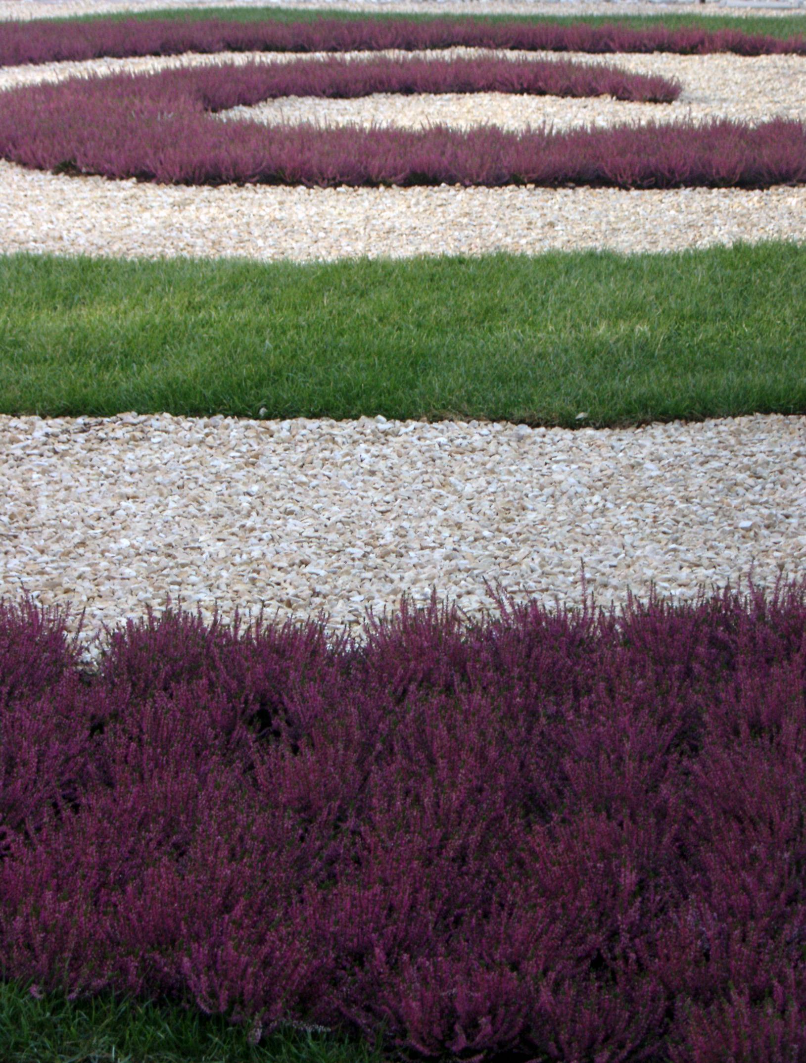 Giardino sede l 39 oreal luoghi italianbotanicaltrips for Viola cornuta inverno