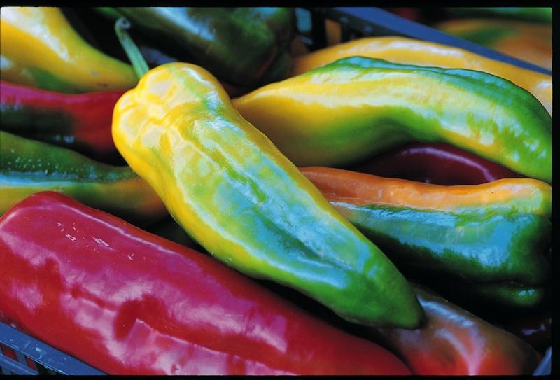 peperone-corno-di-bue-di-carmagnola-archivio-fotografico-slow-food