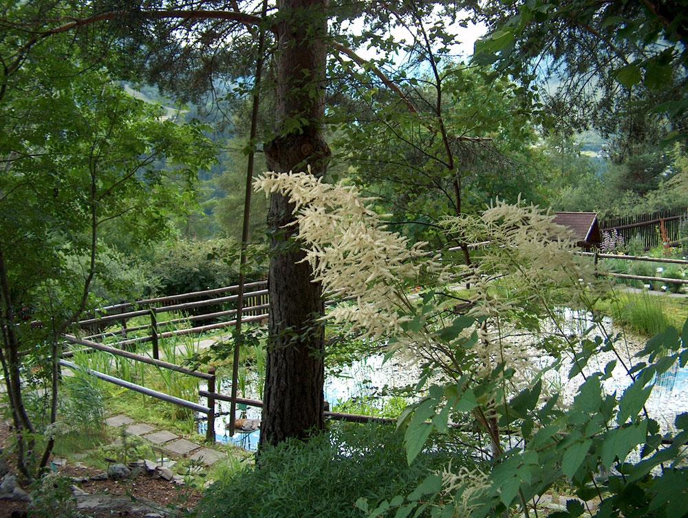 Cover Giardino botanico alpino Rezia, Bormio, Sondrio