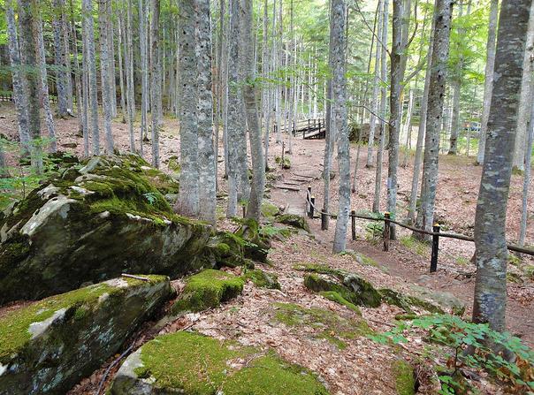 Cover Orto Botanico Forestale dell'Abetone