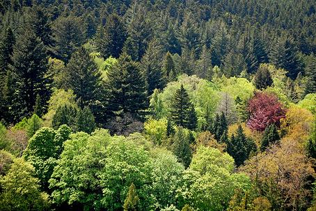 arboreto-vallombrosa
