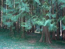 Cover Arboreti Sperimentali di Vallombrosa