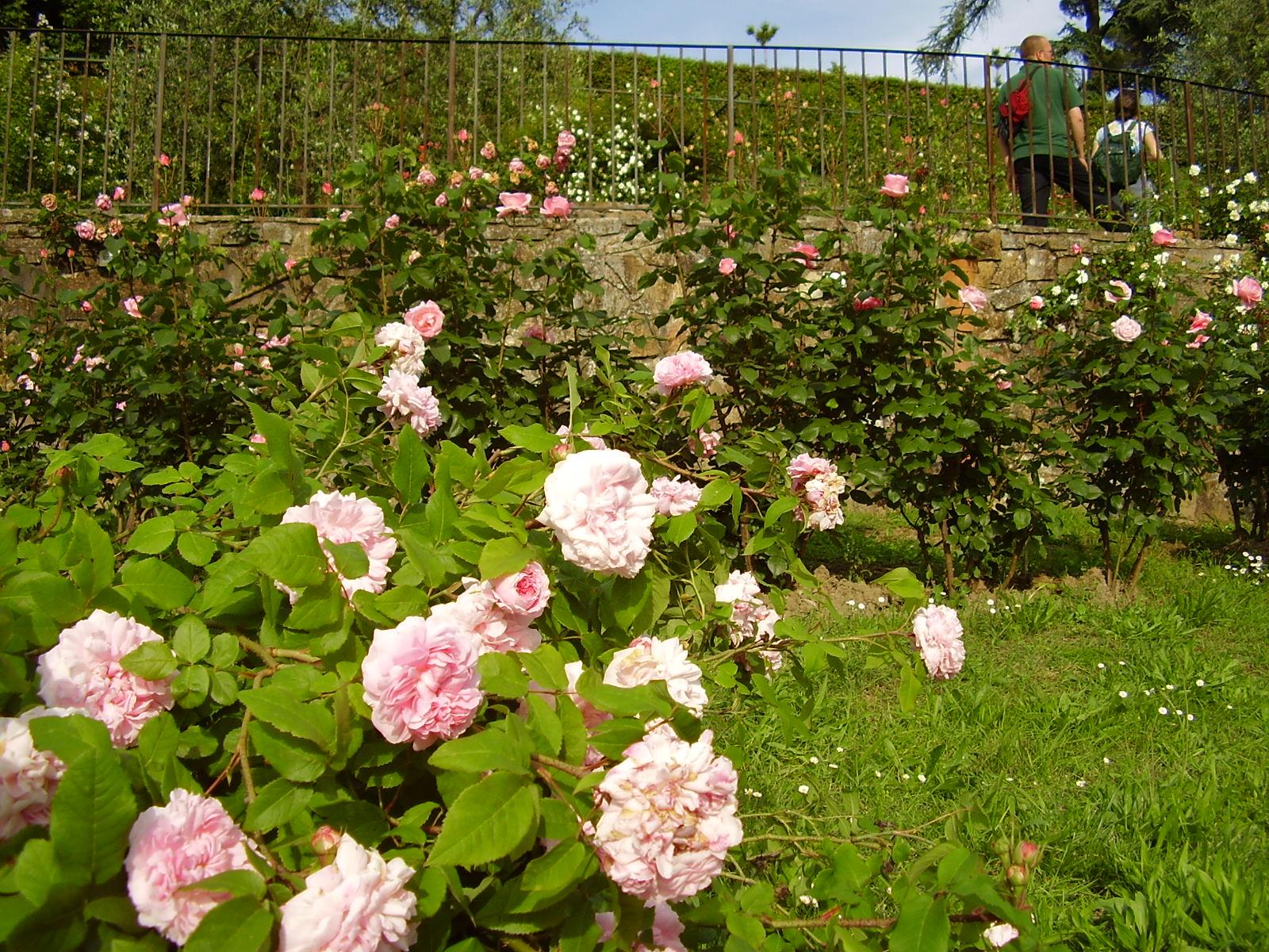 giardino-delle-rose-3