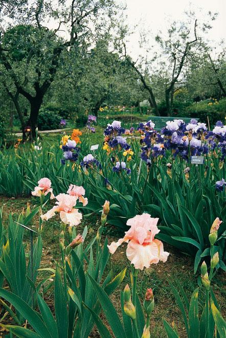 Cover Giardino dell'Iris