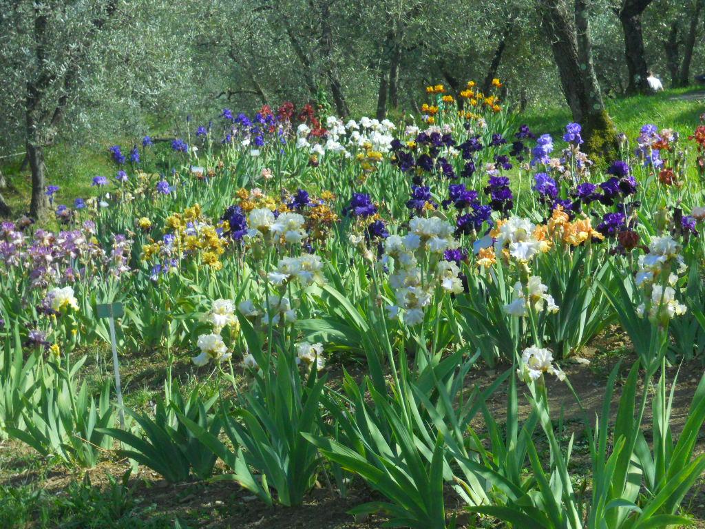 giardino-delliris2