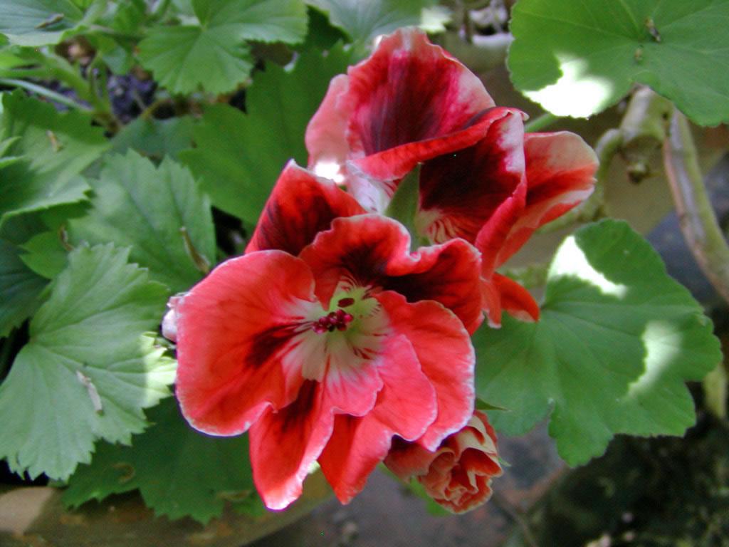 orto-botanico-pisa-fiori-piante-100-jpg