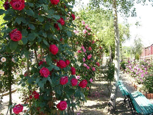 fiori-parchi-italiani-1