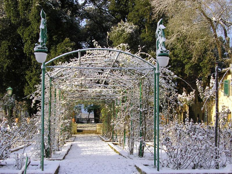 roseto-con-neve