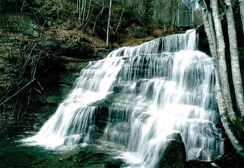 Cover Parco Nazionale Foreste Casentinesi