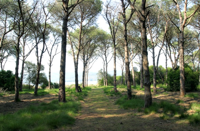 pineta-della-feniglia2