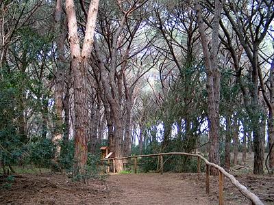 tombolo-di-feniglia-botanical-trail