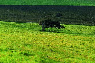 pala-terreni-albero-2013