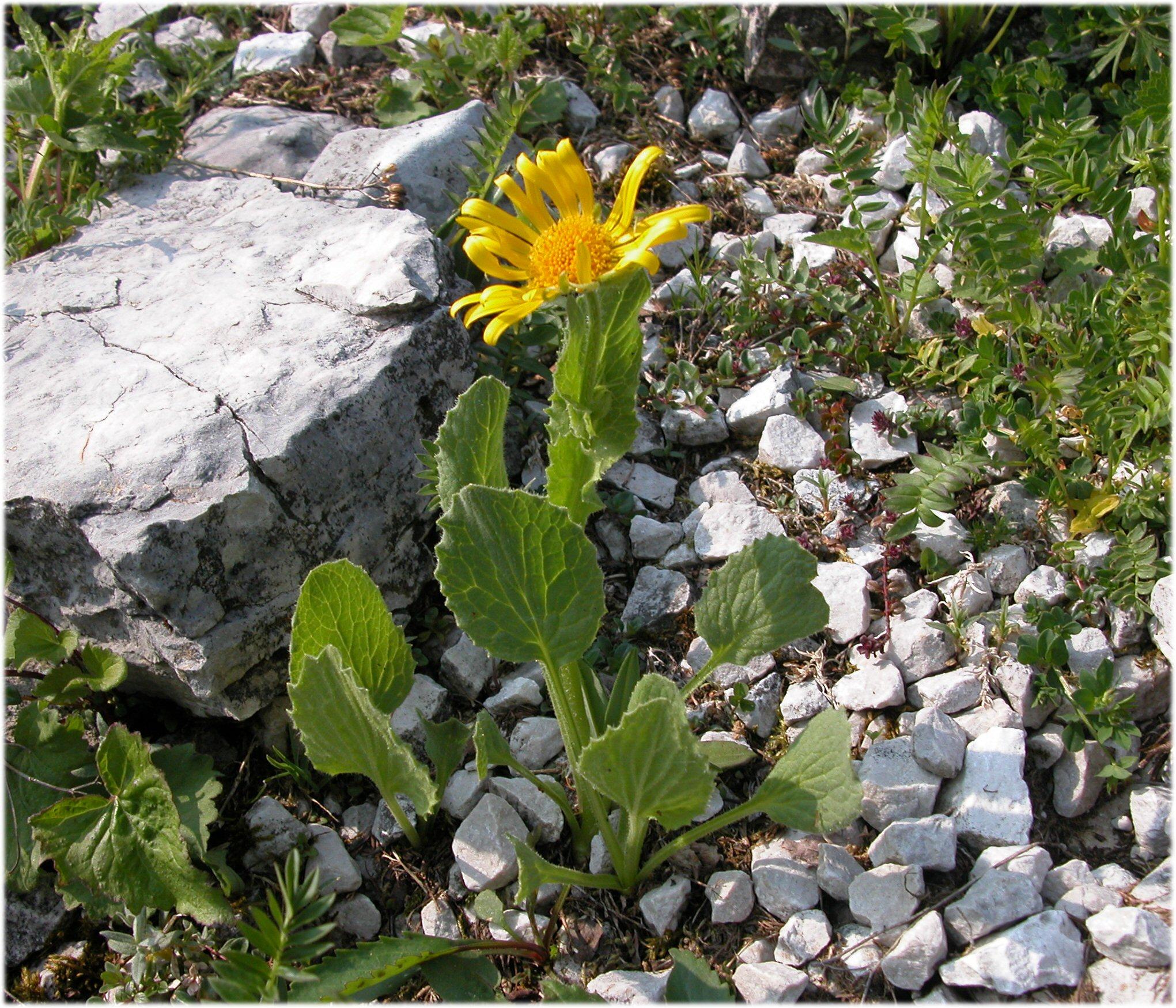 Cover Giardino botanico delle Alpi Orientali