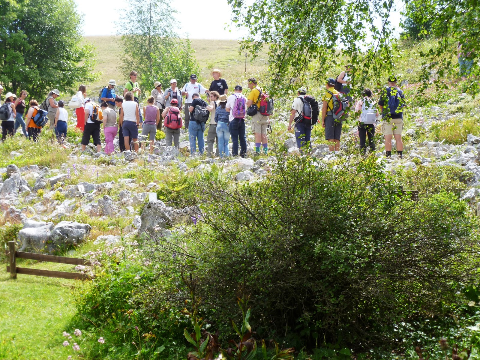 rodiola-rosea-digitale-lutea-giardino-botanico-alpino-del-monte-faverghera-nevegal-belluno-vittorio-alberti