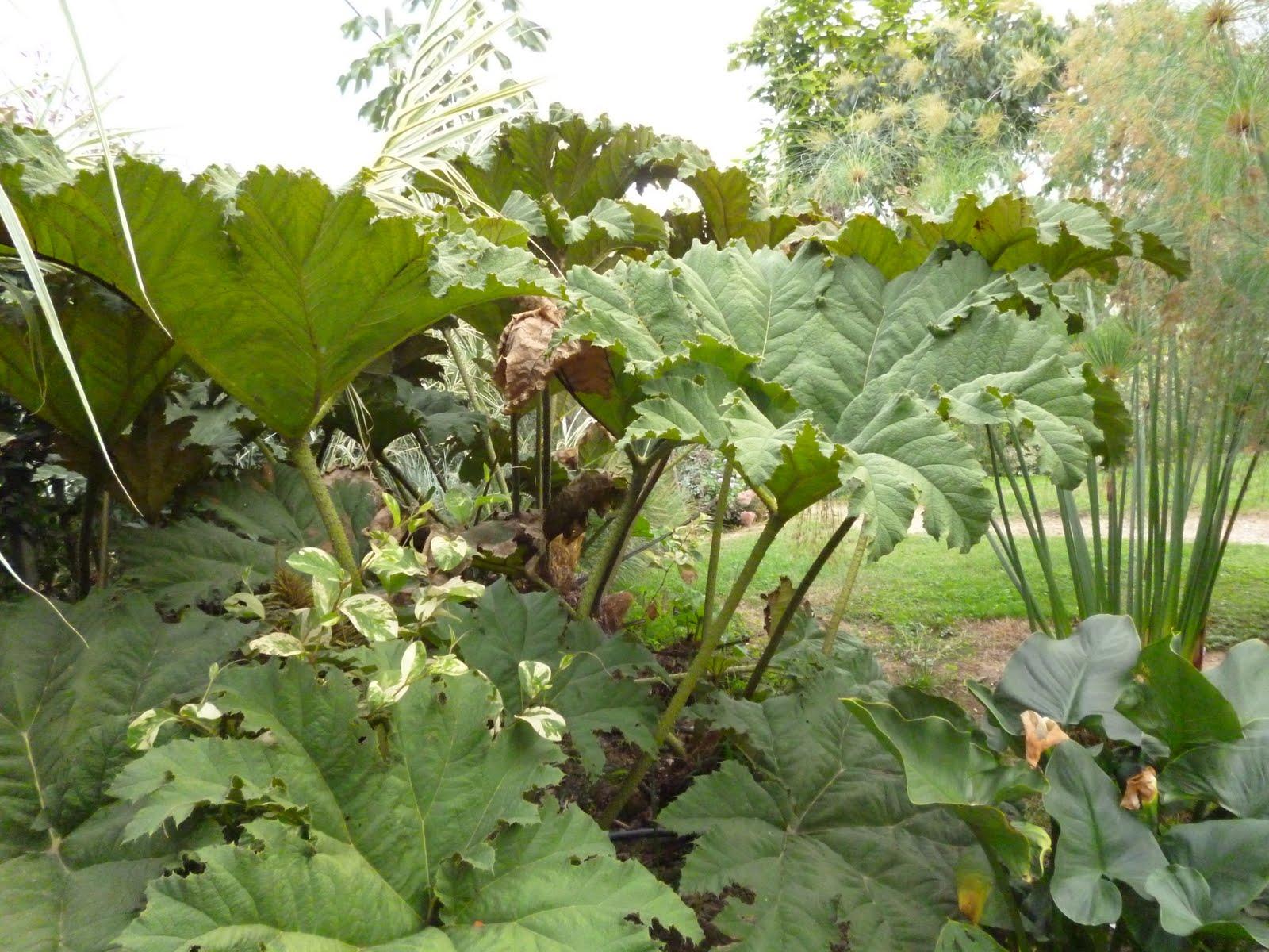 Cover Giardino Botanico di Villa Bricherasio