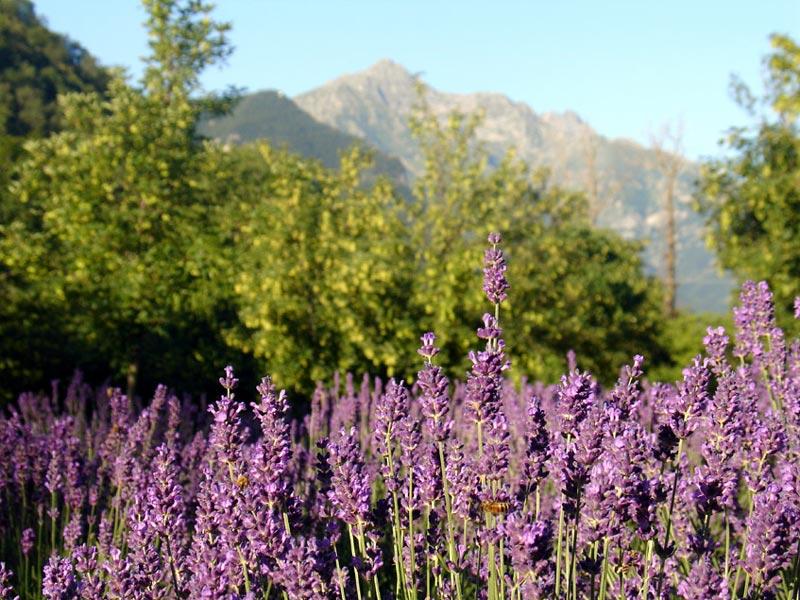 Cover Giardino Botanico Valderia