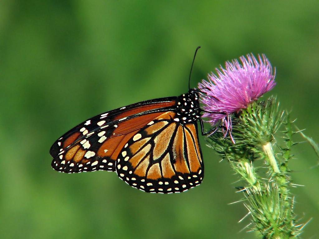 Cover La Casa delle Farfalle