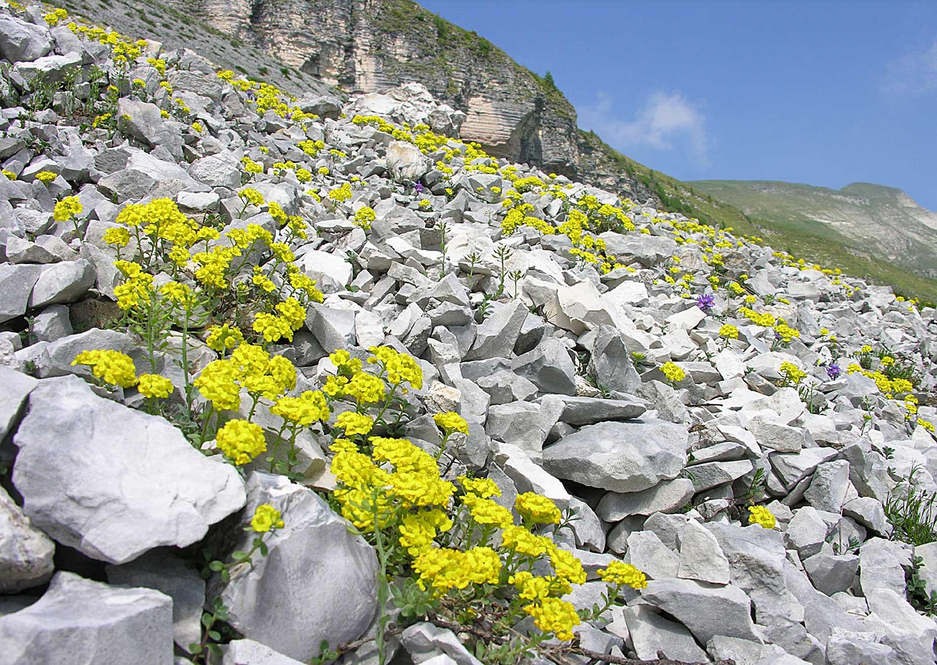 Cover Parco Nazionale Dolomiti Bellunesi