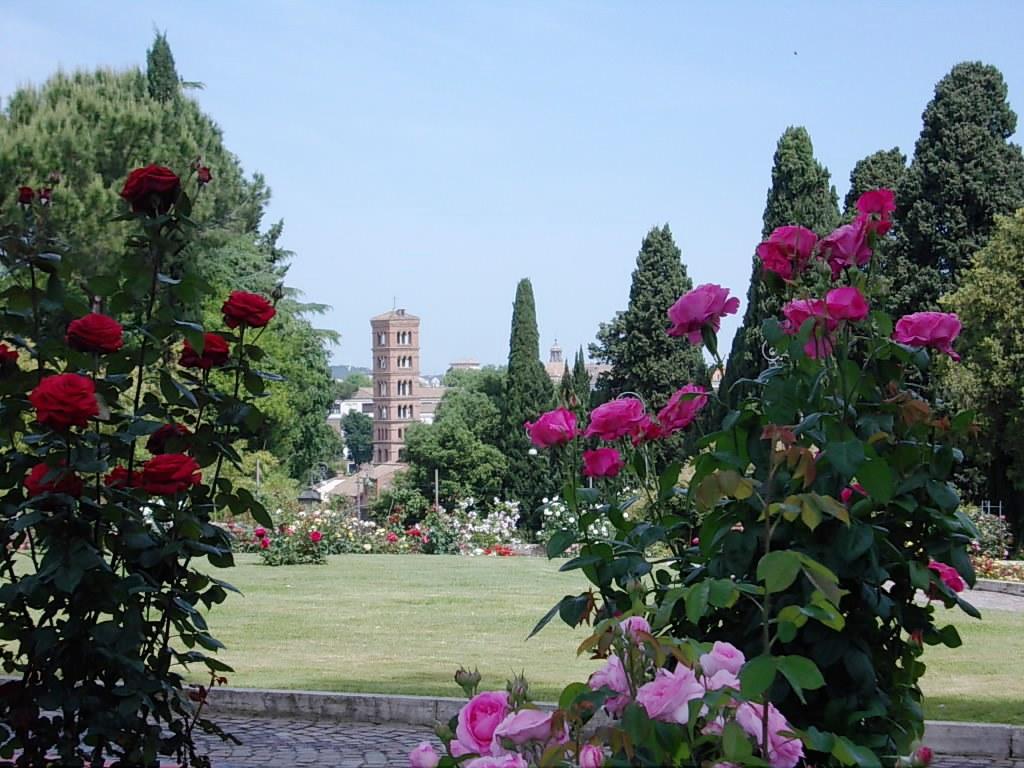 roma-rose