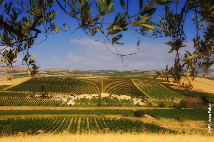 the-estate-in-contessa-entellina