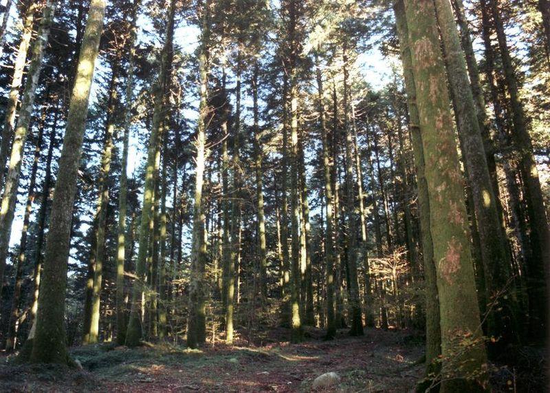 800px-bosco-di-archiforo-serra-san-bruno-parco-naturale-regionale-delle-serre