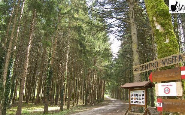 riserva-mab-montedimezzo
