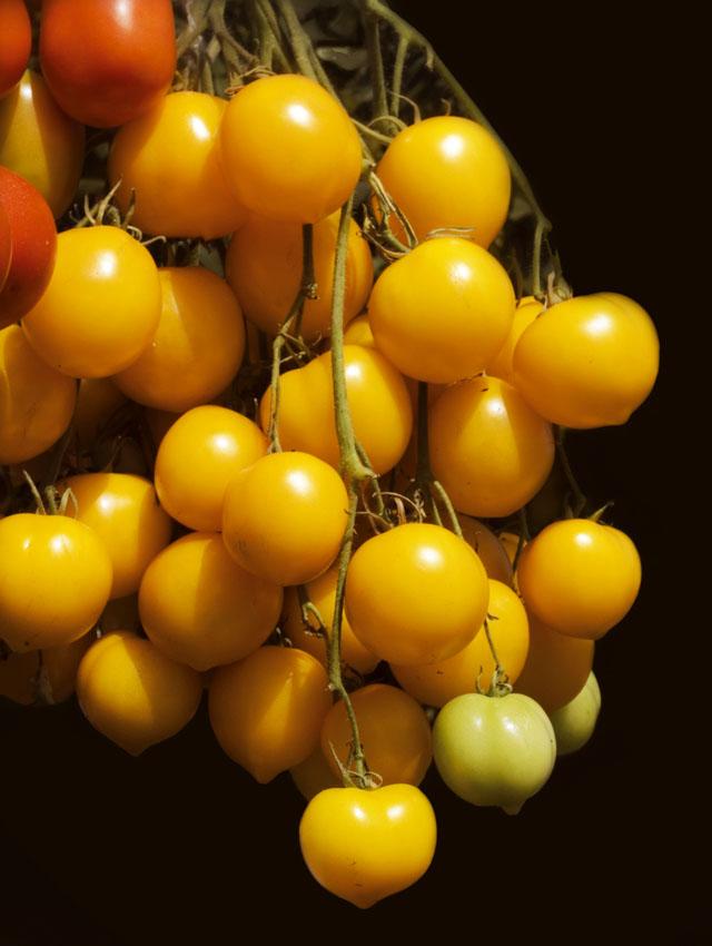 Cover Pomodori gialli d'inverno