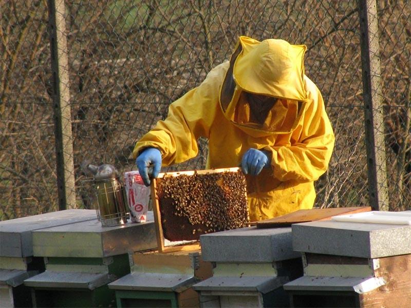 24-03-2011-15-58-43-apicoltori-lavoro4