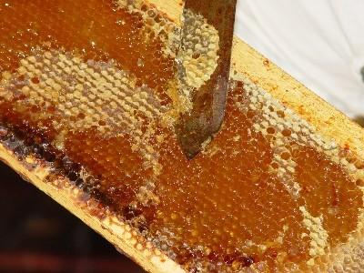 produzione-miele