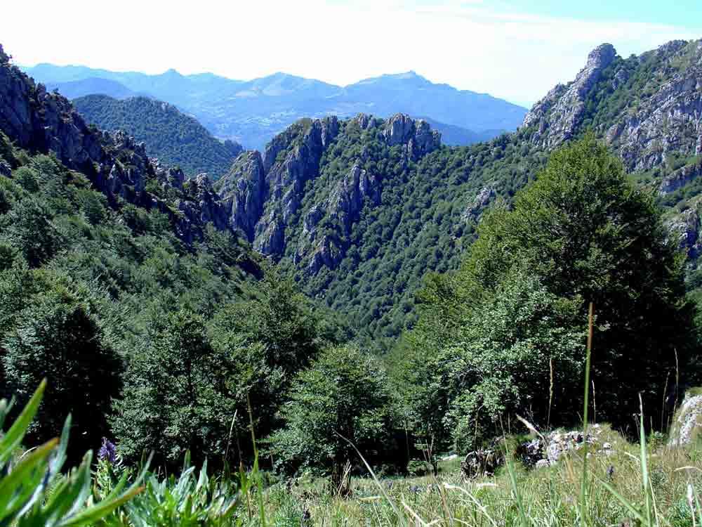 panorama-foresta