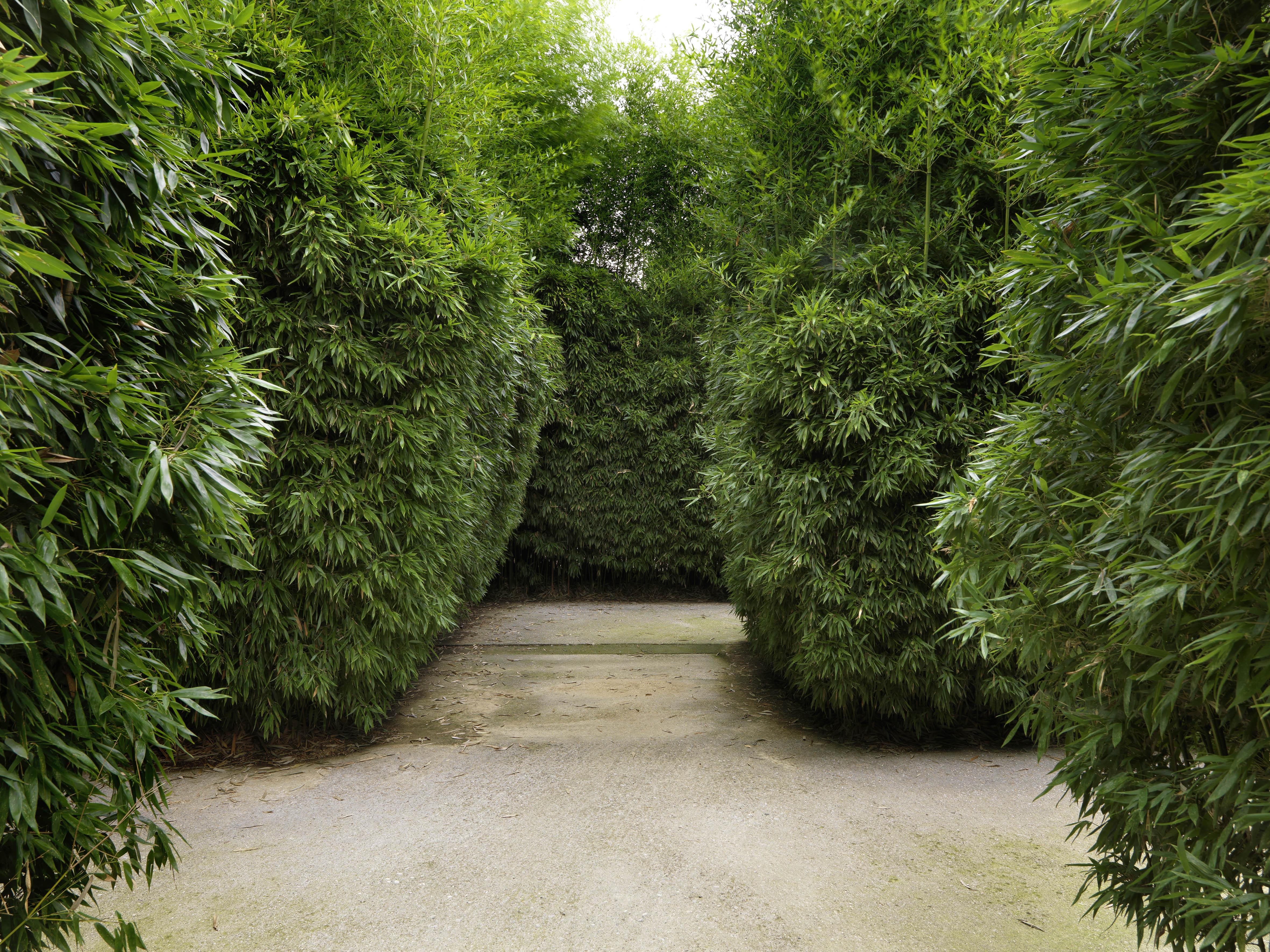 labirinto-0069-scorci-interni-del-labirinto-foto-di-massimo-listri